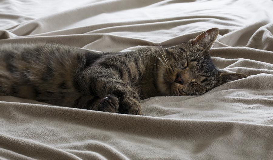 spiacy kot