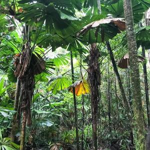 Kamperem przez Australię – las tropikalny, kazuary i wielki błękit