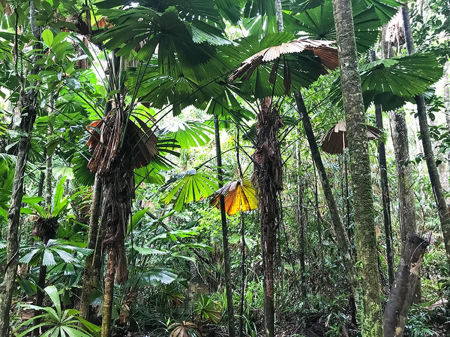 kamperem przez australię, australia, las deszczowy, las tropikalny