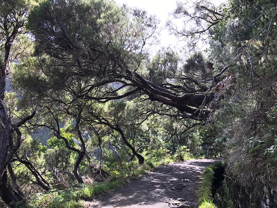 lewady Madery, 11 rzeczy, które trzeba zrobić naMaderze